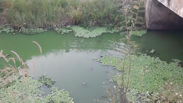 Rác phủ khắp nhiều cống thoát nước trên khu vực con kênh