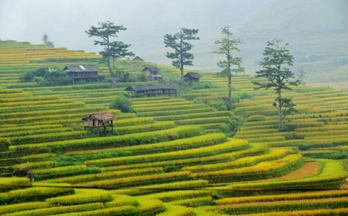 Xã Tú Lệ Là một thung lũng thuộc huyện Văn Chấn, tỉnh Yên Bái.Đây là một trong những điểm dừng chân yêu thích của bất cứ du khách nào trên đường qua Mù Cang Chải.
