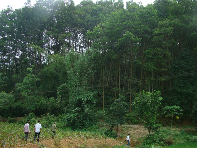Huyện Xín Mần ,Hà Giang với rất nhiều tán rừng chưa được khai thác.