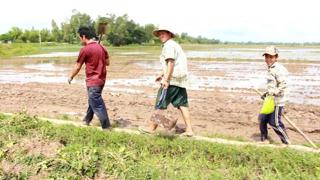 Lúa trên những cánh đồng thu hoạch xong sẽ báo hiệu mùa săn chuột đồng bắt đầu nhộn nhịp hẳn lên.
