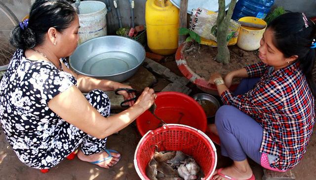 Thời điểm mùa nước lũ thì thịt chuột đồng ăn thơm ngon, béo ngậy.