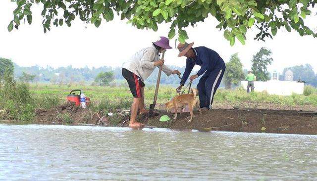 Mỗi khi mùa nước lũ về, công việc săn chuột đồng trở thành thú vui và có thêm nguồn thu nhập đáng kể của người dân miền Tây.
