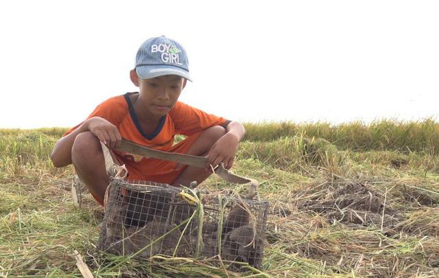Hiện tại, giá chuột bán tại chợ khoảng 80.000 đồng/kg.