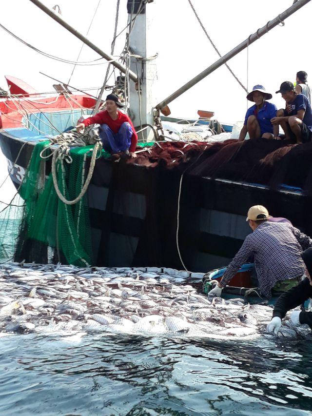 Cận cảnh mẻ cá