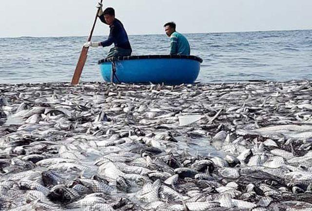 Ngư dân dùng thuyền thúng thu hoạch cá.