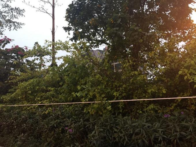 Trên đường Võ Chí Công, đoạn từ cầu Nhật Tân về, từ chiều nay, dây được căng thêm dọc hàng cây ngăn cách hai làn xe.