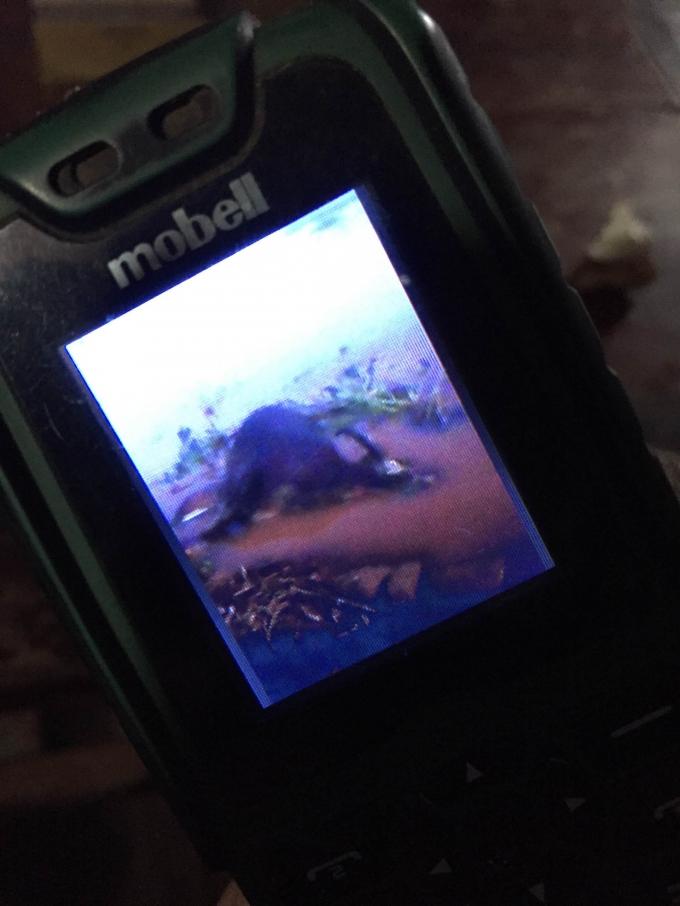 Xác trâu được tìm thấy ở rìa sông Serepok, thuộc vườn quốc gia Yok Đôn (ảnh chụp bằng điện thoại của người dân)