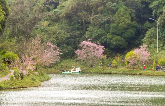 Hồ Đắk Ke hay những đôi tình nhân họ hay đặt là hồ tình yêu.mai anh đào,mai anh dao,địa điểm du lịch,dia diem du lich