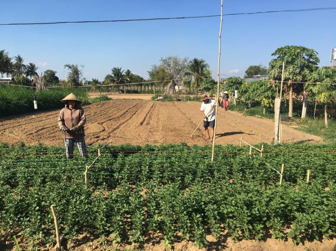 Vướng dự án treo nên người dân không thể trồng cây dài ngày để phát triển kinh tế