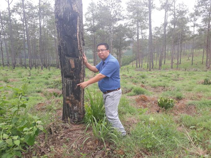 Rừng của Công ty Khang Thịnh cũng đã hết và đất cũng bán cho dân.