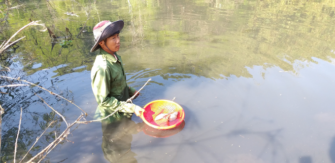Ông T. người trực tiếp với nhiều tạ cá chết trên khúc sông bị xả thải.