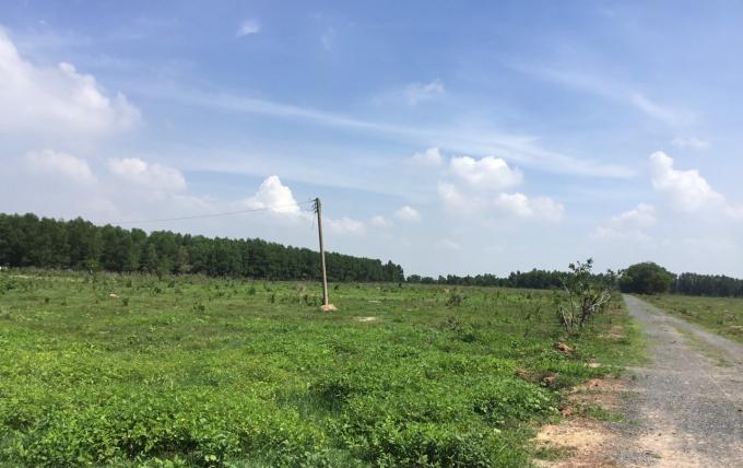 Phần đất mà cụ Hơn cho rằng thuộc quyền sở hữu của gia đình.