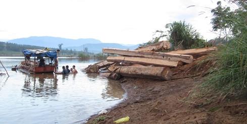 Bãi gỗ lậu tập kết trên sông Sê San bị phát hiện