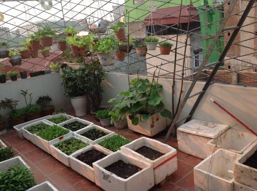 Trước khi trồng rau, anh Long phải tìm hiểu rõ từng đặc tính của loài định gieo trồng.