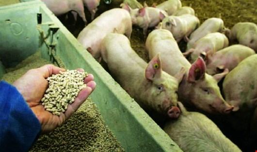 100% cơ sở chăn nuôi dùng kháng sinh. Ảnh: minh họa.