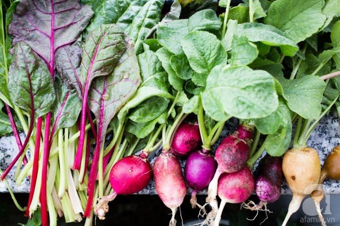 Những lần thu hoạch rau ở ban công.