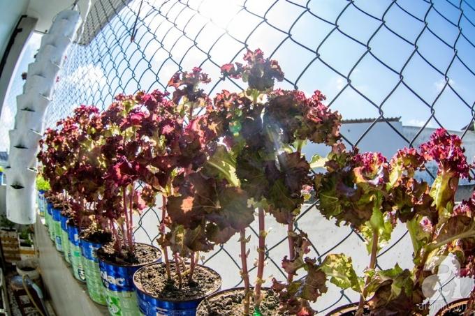 Tận dụng thành ban công để trồng thêm các loại rau như mùi, xà lách, hành...