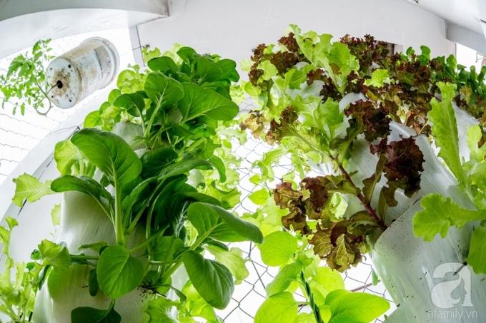 Trụ được anh Biển trồng khá nhiều loại rau.