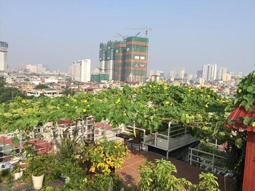 Vườn cây tốt um, sai trĩu trên sân thượng của gia đình HN