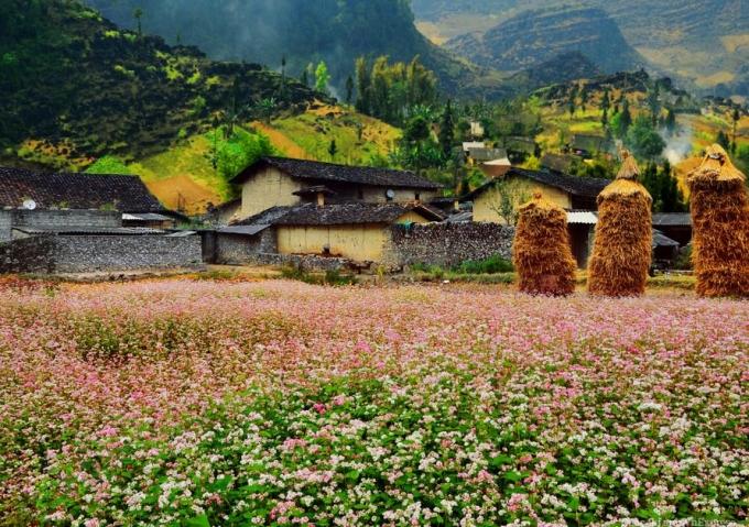Lễ hội hoa tam giác mạch Hà Giang lần 2 hứa hẹn sẽ mang đến nhiều bất ngờ cho du khách.