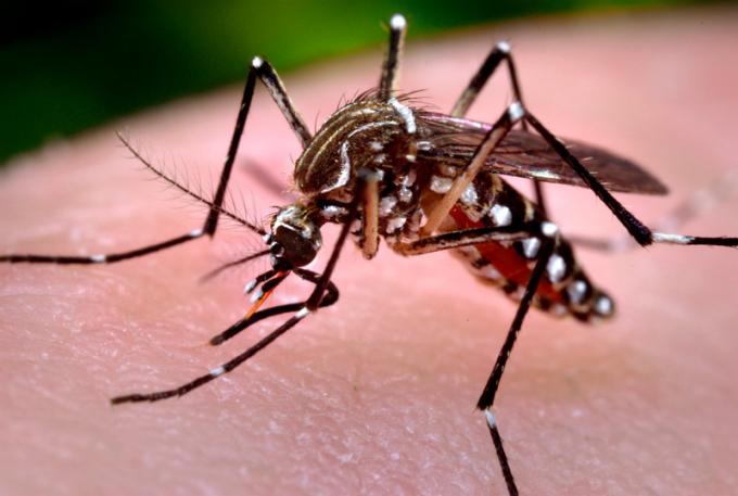Số ca mắc sốt xuất huyết tại Hà Nội có dấu hiệu giảm trong tuần qua. Ảnh: minh họa