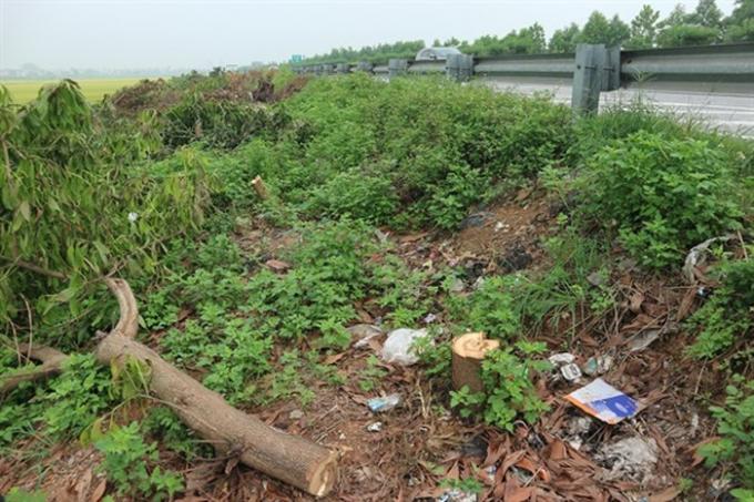 Cây keo bị chặt phá hàng loạt trên cao tốc Cầu Giẽ-Ninh Bình