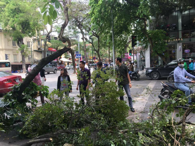 Hà Nội: Cây xanh bất ngờ đổ gục khiến nhiều người hốt hoảng