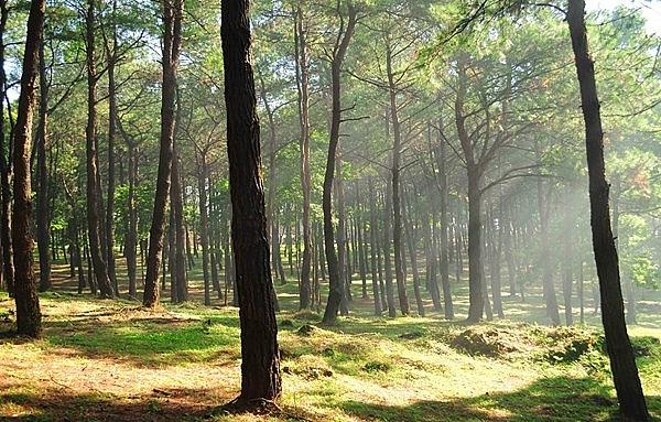 Đến với Ba Vì, du khách sẽ được trải nghiệm rừng thông vi vút, rừng tùng rộng lớn của đại ngàn như đưa du khách lạc tới một miền đất kỳ diệu.