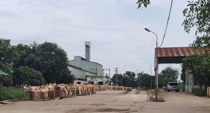Khu vực cổng chính vào nhà máy tinh bột sắn Intimex thành sân phơi gỗ bóc