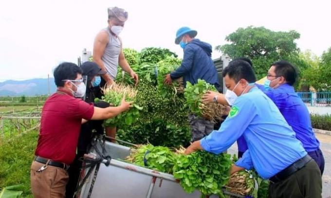 Lượng rau xanh tồn ứ tại huyện Nghi Lộc là rất lớn