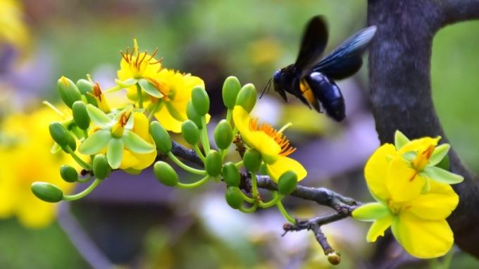 Tưng bừng hội chợ hoa Tết Đà Nẵng