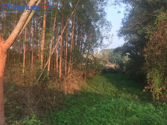 Rừng cây vẫn um tùm không có dấu hiệu của nơi tập kết đất thải hàng chục nghìn m3.