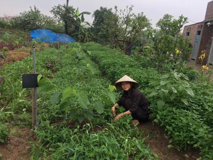 Công việc hàng ngày như thế này khiến họ gần gũi, chan hòa và ước muốn làm nông nghiệp sạch.