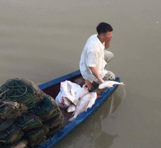 Nhiều người dân làm nghề thả đáy đánh cá trên sông giật mình khi thấy hiện tượng cá chết hàng loạt dạt vào đáy, nổi trên sông.
