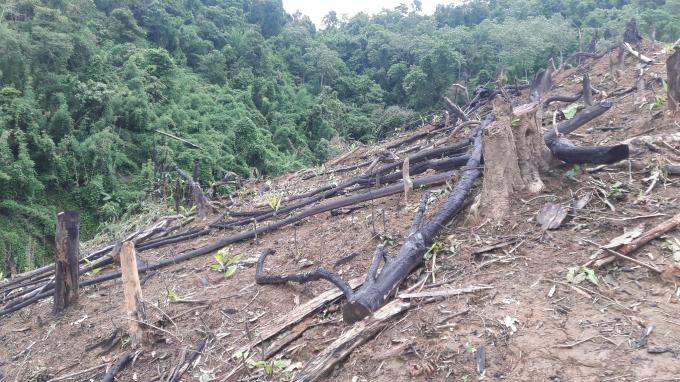 Hàng chục ha rừng được giao theo Nghị định 163 bị tàn phá trên địa bàn 2 xã Nam Sơn và Bắc Sơn, huyện Qùy Hợp.