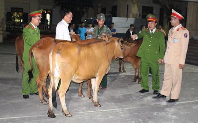 Cơ quan điều tra trao trả lại đàn bò bị mất cắp cho gia đình nạn nhân.