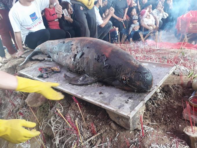 Cá ông dài khoảng 1m nặng khoảng 40 kg được phát hiện trôi dạt vào cửa sông, thuộc địa bàn xã Sơn Hải.