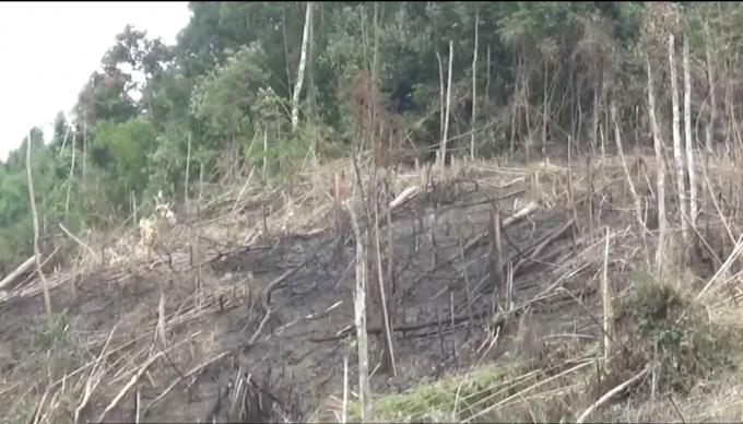 Vị trí rừng bị phá do BQL rùng phòng hộ Qùy Châu quản lý.