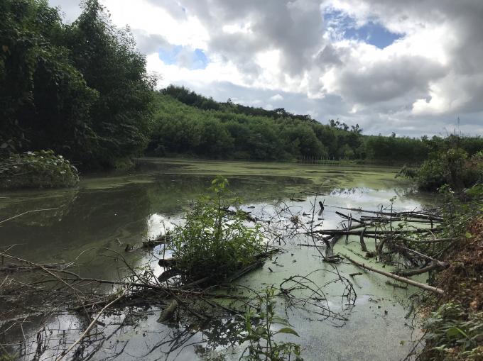 Nếu có mưa lớn, nước thải từ các hồ sẽ được tràn một cách tự nhiên xuống phía dưới nơi hàng chục hộ dân sinh sống.