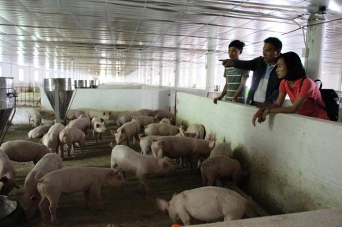 Cấm nuôi gà lợn trong thành phố được cho là thiếu khả thi. (Ảnh minh họa)