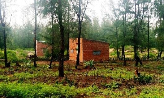 Nhà xây trái phép trong khu vực rừng dương phòng hộ ven biển thuộc phạm vi hành lang tỉnh lộ 639.