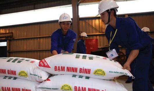 Phân bón nhập khẩu tăng khiến Đạm Ninh Bình công suất 550 ngàn tấn giảm xuống còn 150 ngàn tấn, vẫn không bán được.