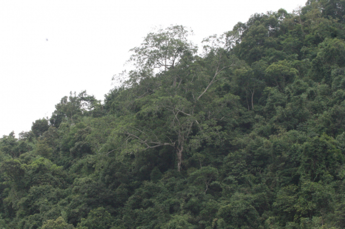 Hiện trạng rừng trong Khu bảo tồn thiên nhiên Đồng Sơn – Kỳ Thượng có nhiều loài thực vật có giá trị bảo tồn, thuộc loài quý hiếm, có trong Sách Đỏ Việt Nam 2007, Sách Đỏ thế giới (IUCN) như sến mật, vàng tâm, sồi đĩa, dẻ, táu...