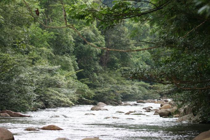 Những con suối trong vắt nằm len lỏi trong rừng dẫn nước ra hồ Cao Vân; hai bên là ngút ngàn, tầng tầng, lớp lớp thảm thực vật đa dạng, phong phú.