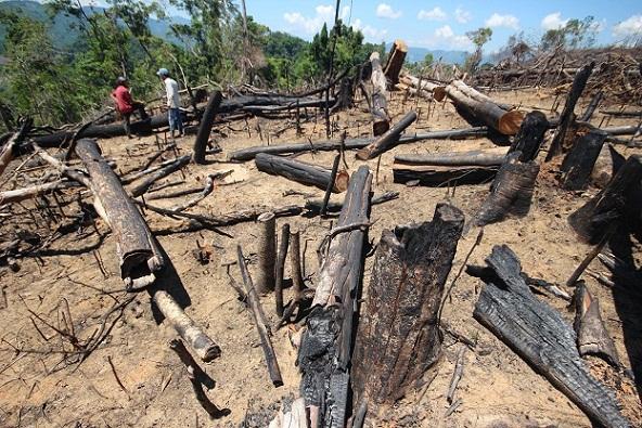 Diện tích rừng tại Tiểu khu 556 bị chặt phá trái phép.