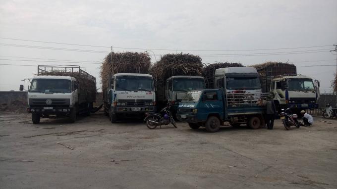 """Hàng chục xe tải chở mía """"cồng kềnh"""" nằm chờ tại sân và cổng Nhà máy mía đường Đắk Lắk."""
