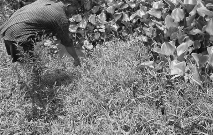 Chỗ chôn xác thầy bùa nhiều năm qua trở thành vũng nước ngập.