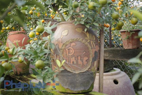 Những chiếc bình gốm cũng phải là những chiếc bình được chủ vườn mua với nhiều kiểu cách để phù hợp với ngày tết.