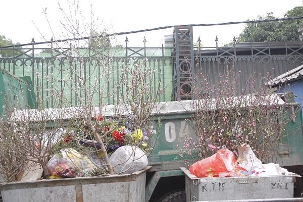 Tại những bãi tập kết rác ở Hà Nội, dễ dàng bắt gặp các cành đào, cây đào tàn bị vứt lên xe rác.