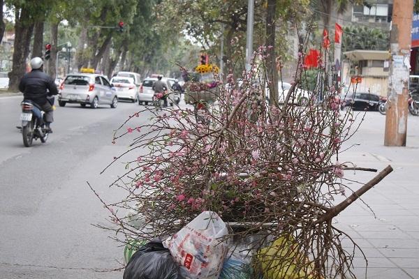 Hình ảnh những cành đào, cây đào chất lên thành đống hoặc cắm trên các xe rác.